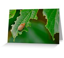 Beetle Feast Greeting Card