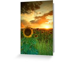 The Sunworshiper Greeting Card