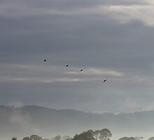 Birds Over the Fog by pepstwolf