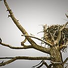 Bald Eagle Tree by Joe Elliott