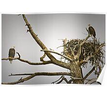 Bald Eagle Tree Poster