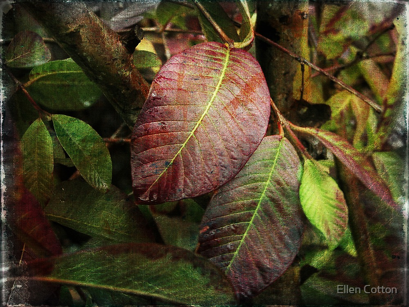 Painted Leaves by Ellen Cotton