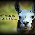 Save the Drama for your Llama by Angie O'Connor