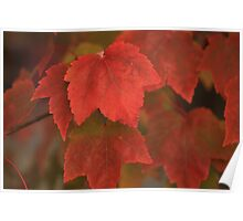 The colours of Autumn Poster