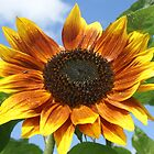 Sunshine flower by millymuso