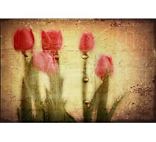 Spring Notes  Photographic Print