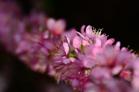 Heralds Of Spring by Georgie Hart