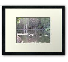 pond in the park Framed Print