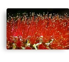 In This Macro World: A Time for Harvest Canvas Print