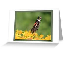 Red Admiral (3) Greeting Card