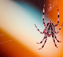 The spider's touch, how exquisitely fine! Feels at each thread, and lives along the line by ARIANA1985