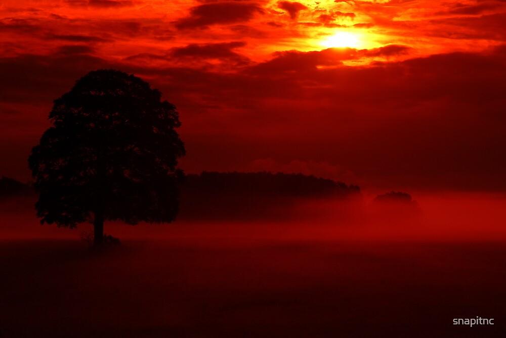 """dawn &the mystical oak"" by snapitnc"