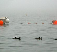 Boats, Floats, Fog.  And Ducks! by David Davies