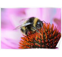 Bumblebee on a flower Poster