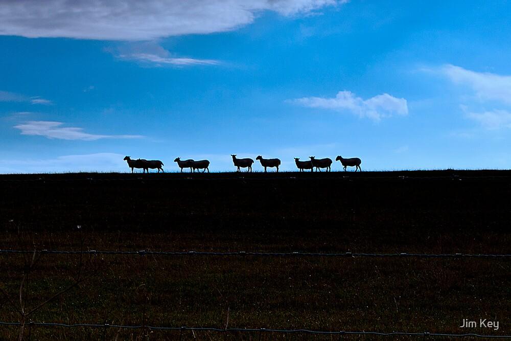 Ewe Horizons  by James  Key