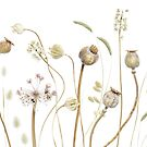 Seedpods and grasses by Mandy Disher