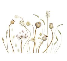 Seedpods and grasses Photographic Print