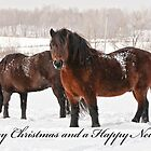 Christmas Card - Horses in Field by Michael Cummings