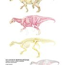 Iguanodon Bernissartensis Factsheet by A V S TURNER