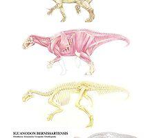 Iguanodon Bernissartensis Factsheet by A V S TURNER