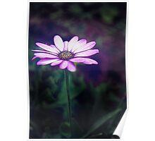Flower spotlight Poster