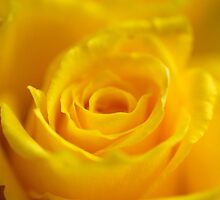 Yellow Dream by vbk70