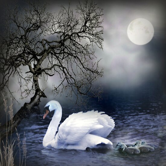 Swans by Moonlight by Morag Bates