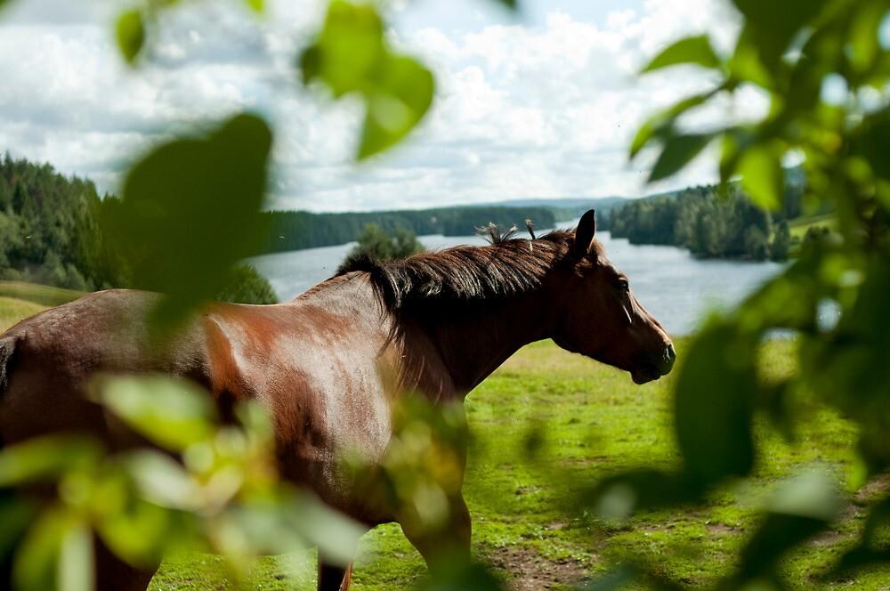 Häst, Fällfors by Bjarte Edvardsen