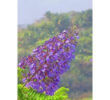 A tropical blossom in the jungle - Flor tropical en la selva Photographic Print