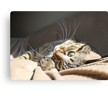 Wonderment  Canvas Print