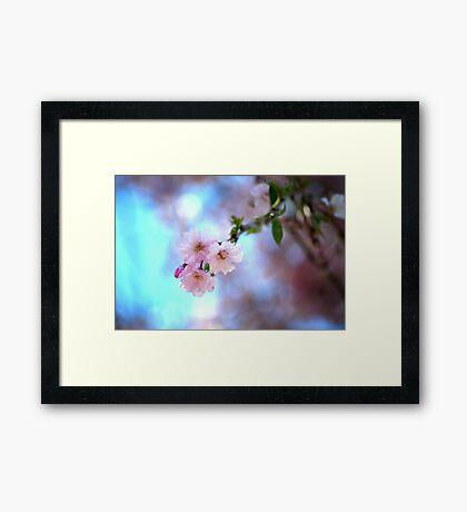 Bloom- Weeping Cherry Framed Print