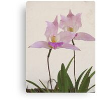 Queen of the flowers - orchids of the tropics Canvas Print