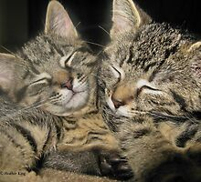 Siamese Twins by Heather King