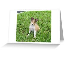 Holly In The Grass Greeting Card