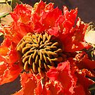 Tropical blossom in orange and brown - Flor tropical en naranja y cafe by Bernhard Matejka