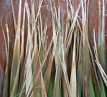 Cordyline Leaves by Orla Cahill Photography