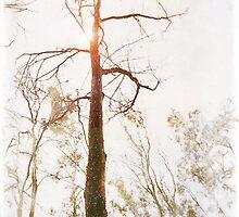 Winter in the Woodlands by Erica Yanina Lujan