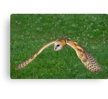American Barn Owl Canvas Print