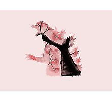 Cherry Blossom Soul Photographic Print