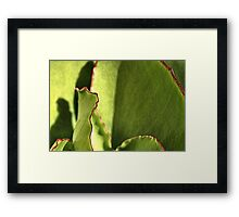 Red Boarders Framed Print