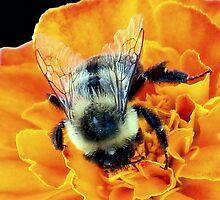 Buzz Off © by Dawn M. Becker