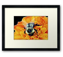 Buzz Off © Framed Print