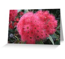 Red Bloodwood Eucalypt Greeting Card