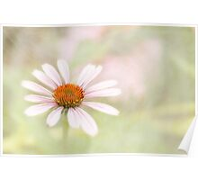 Vintage Cone Flower Poster