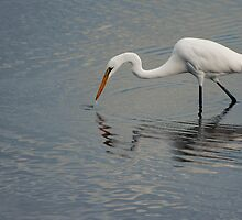Fisherbird - white egret by Jenny Dean