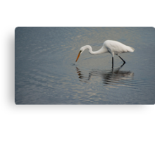 Fisherbird - white egret Canvas Print