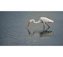 Fisherbird - white egret Photographic Print