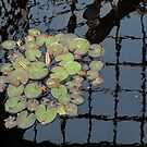 Lilly Pads- Lincoln Park Zoo, Chicago, Illinois by Melissa Delaney