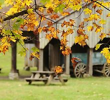 changing colors at the barn by dc witmer