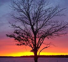 Sunset- Lake Charlevoix, Boyne City, Michigan by Melissa Delaney